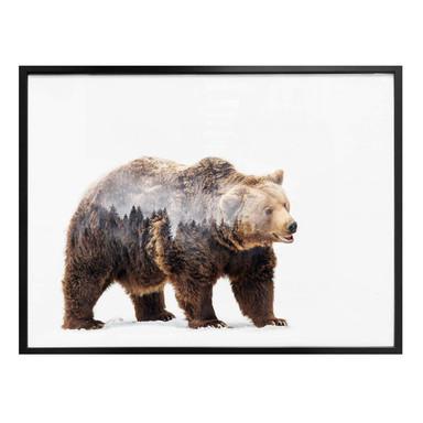 Poster Beáta - Der Bär
