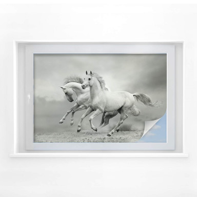 Sichtschutzfolie Pferde im Galopp