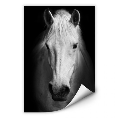 Wallprint White Horse