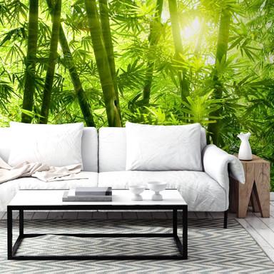 Fototapete Sonnenschein im Bambuswald
