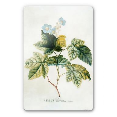 Glasbild Ehret - Rubus