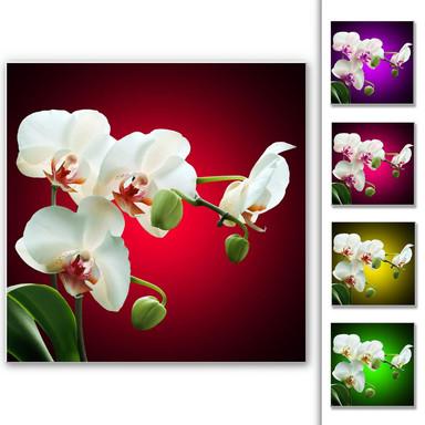 Hartschaumbild Blütenpracht einer Orchidee - quadratisch