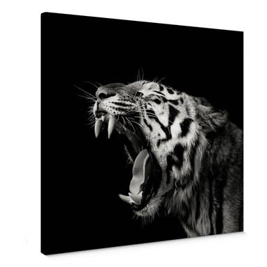 Leinwandbild Meermann - Der Tiger - quadratisch