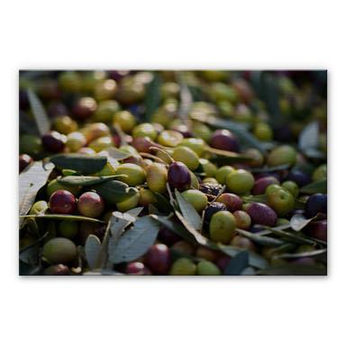 Alu-Dibond Bild Mediterrane Oliven