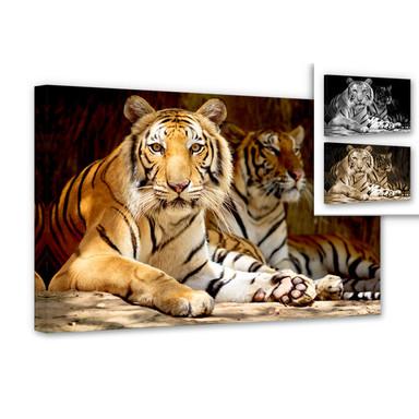 Leinwandbild Zwei Königstiger