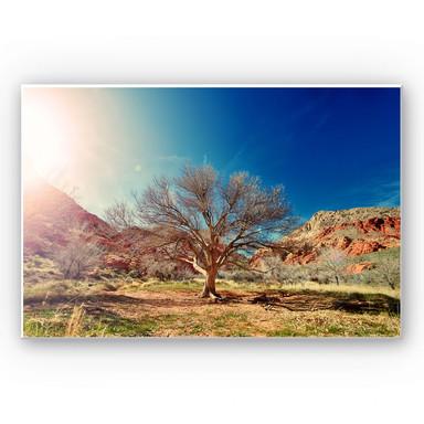 Wandbild Wüstenbaum