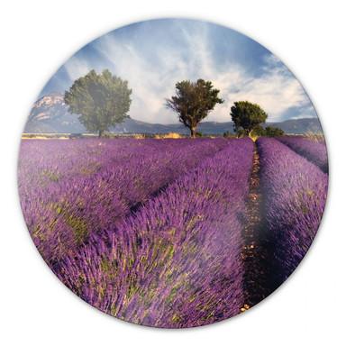 Glasbild Lavendelfeld - rund