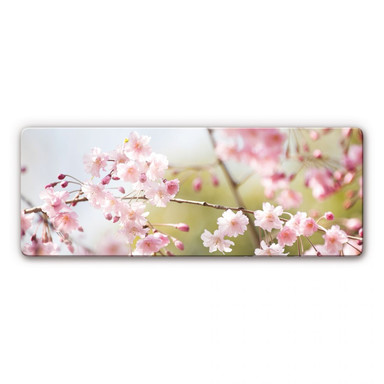 Glasbild Cherry Blossoms Panorama