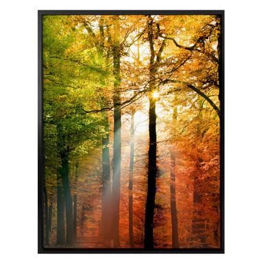 Poster - Goldener Herbst