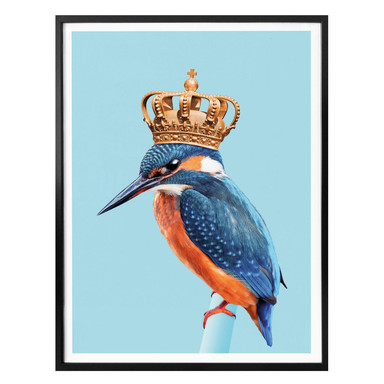 Poster Loose - Kingfisher
