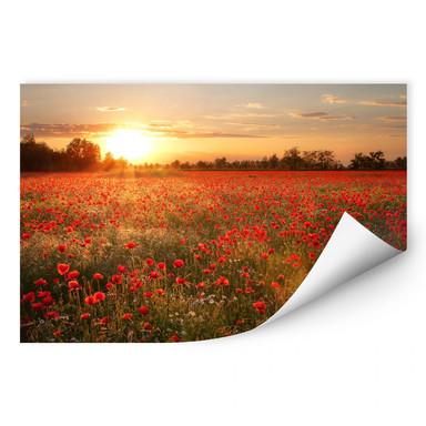 Wallprint Mohnfeld im Sonnenuntergang