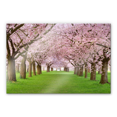 Acrylglasbild Frühling