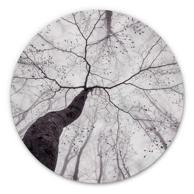 Alu-Dibond Pavlasek - Ein Blick in die Baumkronen - Rund