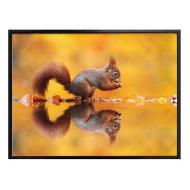 Poster van Duijn - Eichhörnchen mit Nuss
