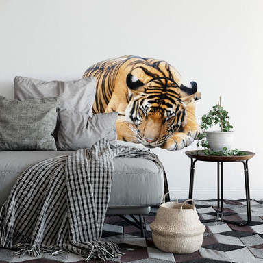 Wandsticker Real resting Tiger