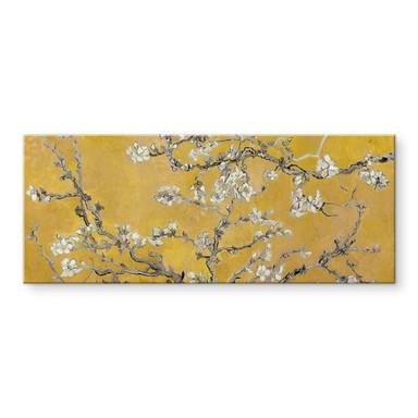 Acrylglasbild van Gogh - Mandelblüte Ocker - Panorama