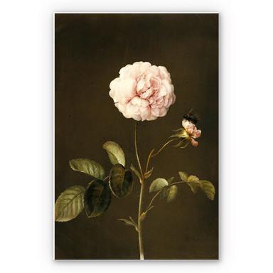 Hartschaumbild Dietzsch - Essig-Rose mit Hummel