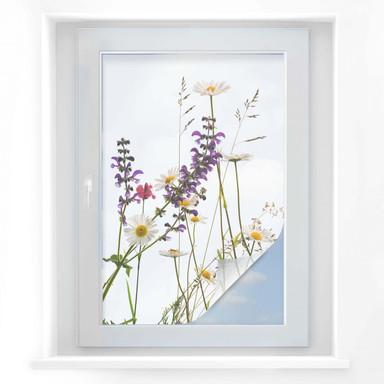 Sichtschutzfolie Kadam - Flora Marguerite