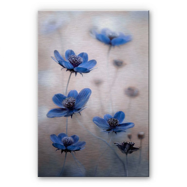 Alu-Dibond Bild Disher - Blue Cosmos