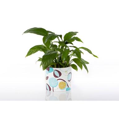 Potteryshirt Classic Leaf - Grösse L