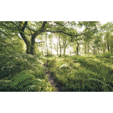 Fototapete Mystic Path