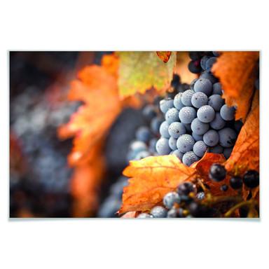 Poster Wein im Herbst
