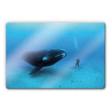 Glasbild NG Walfisch mit Taucher
