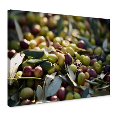 Leinwandbild Mediterrane Oliven