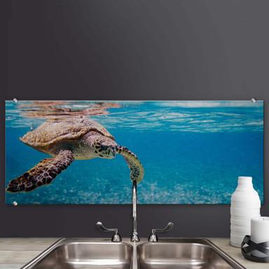 Spritzschutz Schildkröte auf Reisen - Panorama