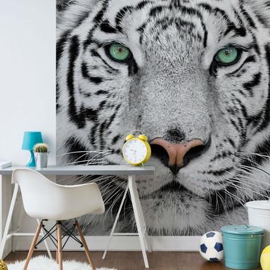 Fototapete Gorgeous Sumatran Tiger - 240x260cm - Bild 1