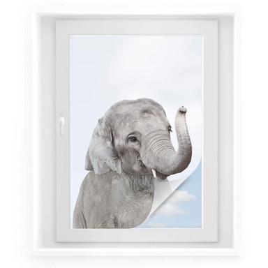 Sichtschutzfolie Sisi & Seb - Baby Elefant