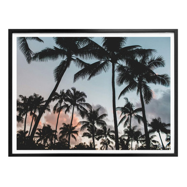 Poster Sunset and Palms