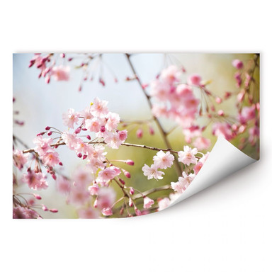 Wallprint Cherry Blossoms