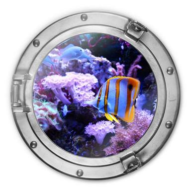 Glasbild rund 3D-Optik Bullauge - Bunte Unterwasserwelt - Lila Korallen