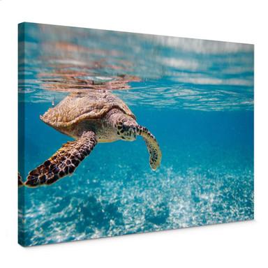 Leinwandbild Schildkröte auf Reisen