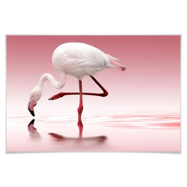 Poster Reindl - Pink Flamingo
