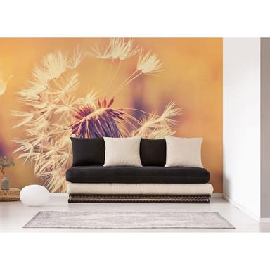 Livingwalls Fototapete Designwalls Dandelion Blumen