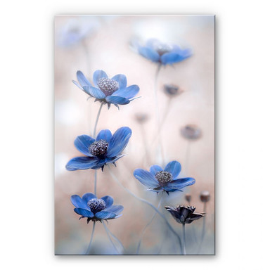 Acrylglasbild Disher - Blue Cosmos
