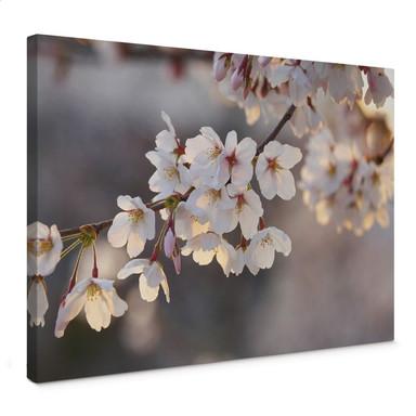 Leinwandbild Kirschblütenzweig