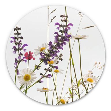Alu-Dibond Kadam - Flora Marguerite - Rund