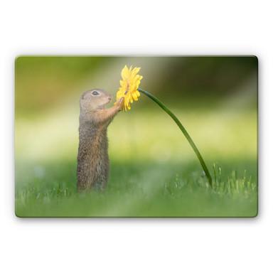 Glasbild van Duijn - Erdhörnchen hält Blume