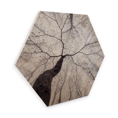 Hexagon - Holz Birke-Furnier Pavlasek - Ein Blick in die Baumkronen