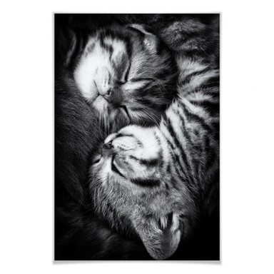Poster Jancova - Sweet Kitten