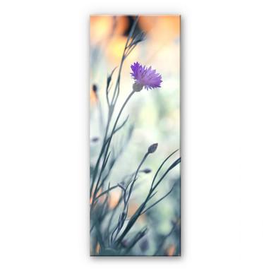 Acrylglasbild Bravin - Luminous purple - Panorama