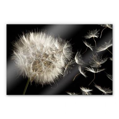 Acrylglasbild Pusteblume