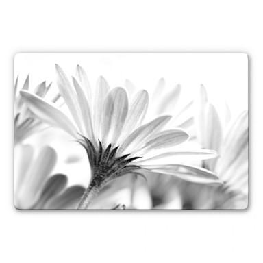 Glasbild Gänseblümchen im Detail