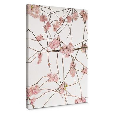 Leinwandbild Kadam - Japanische Kirschblüte