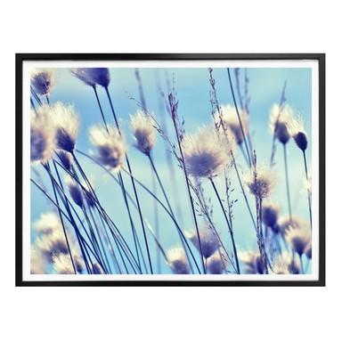 Poster Delgado - Wind im Gras