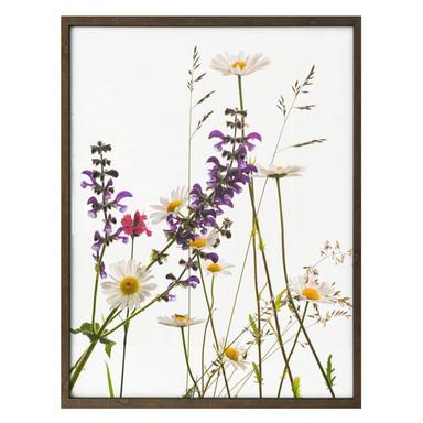 Poster Kadam - Flora Marguerite