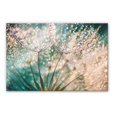 Acrylglasbild Delgado - Funkelnde Pusteblume